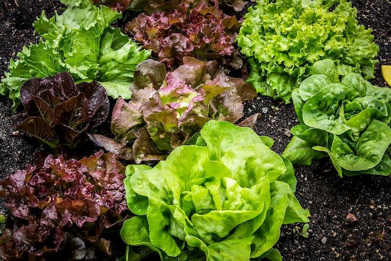 7 dicas para viver uma vida mais sustentável
